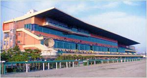 開催競馬場